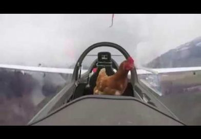 The heartwarming moment a chicken went flying.
